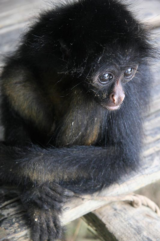 Ecuador_2009-39.jpg